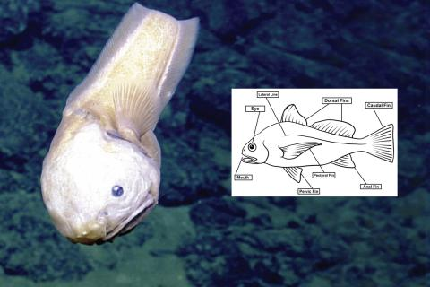 Snailfish and Any Fin activity