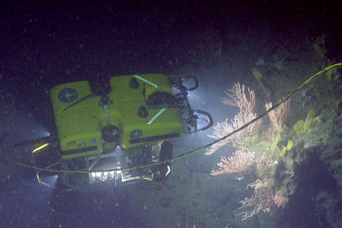 ROV Hercules examines coral ledge