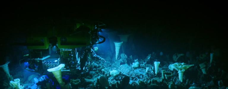 Hercules diving among sponges