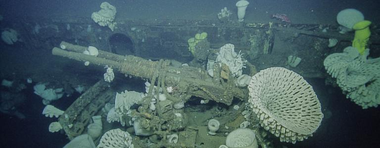 Gun with corals on the USS Independence wreck